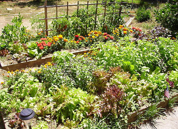 raise bed garden