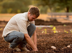 young man planting in fresh tilled soil
