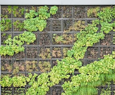Plants growing on wall