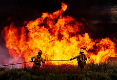 Wildfires Harmful On The Environment