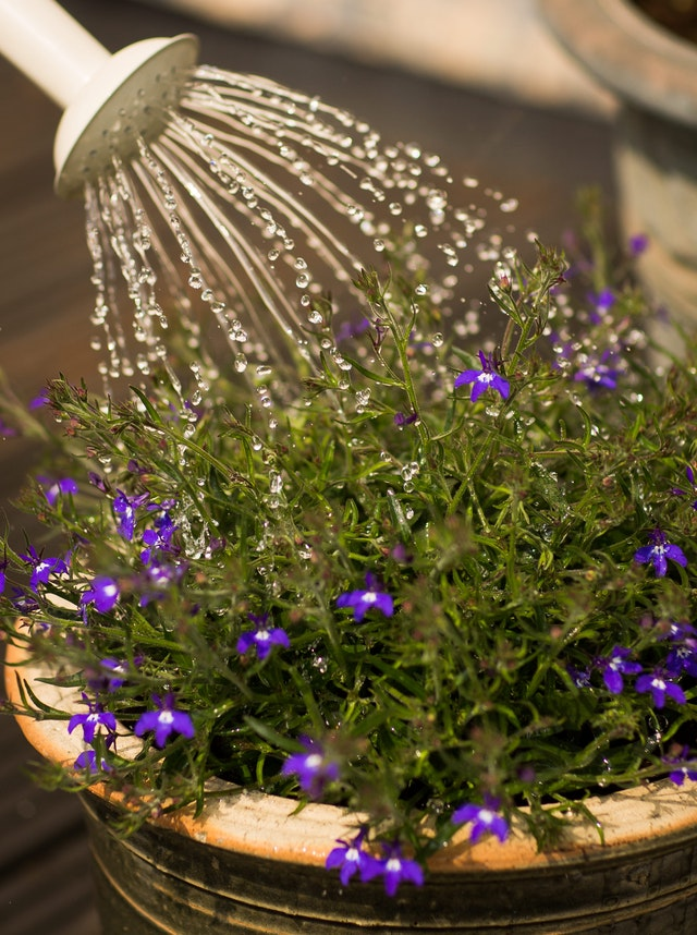 Collect Water Used For Gardening Purposes